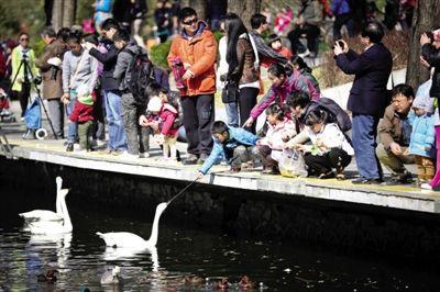 北京进入防控禽流感应急状态 严禁活禽进入市场