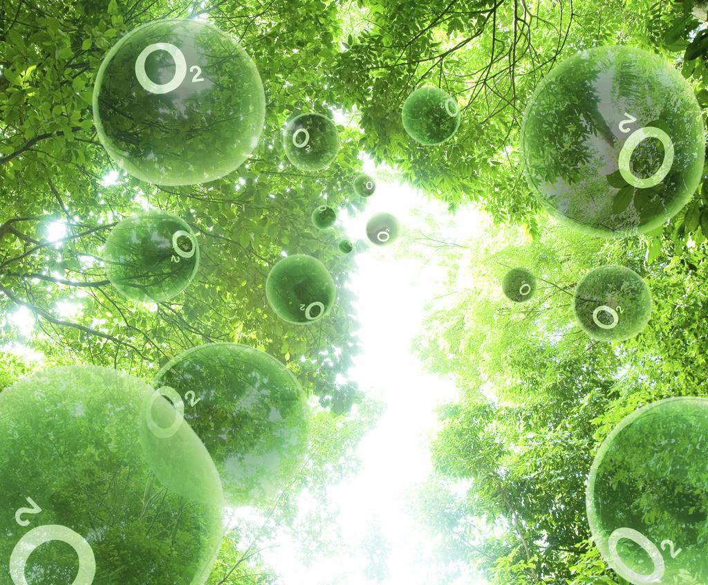 森林是氧气的制造厂图片