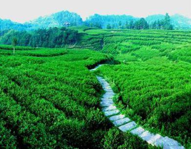 快来看陕西12处国家级美丽田园