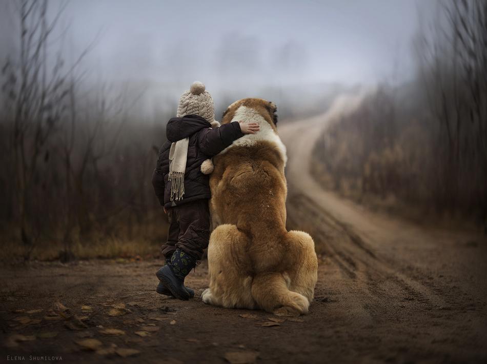 可爱的宠物狗图片