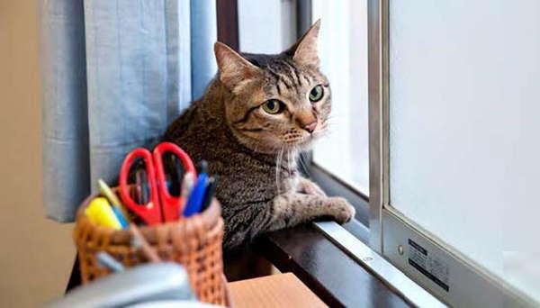 《面包和汤和猫咪好天气》里的太郎.