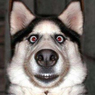 超级搞笑动物表情集锦
