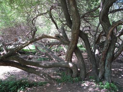旅游频道 游分享  白桦林 原标题:庙王山风景区