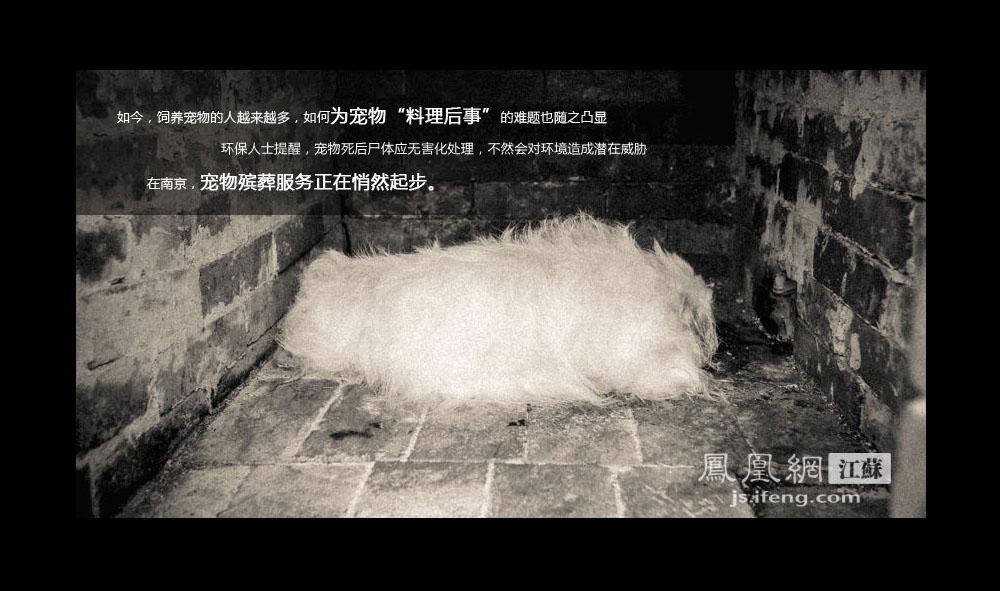 这是一条白色京巴犬,陪伴了主人十三年后,走到了生命尽头。它去世后的第二天,主人把它交给了Z先生,南京一处宠物殡葬场的负责人。京巴犬的尸体被放置在焚烧炉内,静静等待火化。这也是这只宠物留在世间的最后影像。(凤凰网江苏--王剑/图)