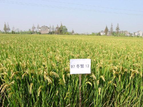 """溯源:8万知青留下一个""""海派大丰""""  上海市驻大丰的农场,最早的是上海"""