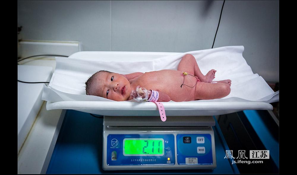 据了解,早产儿体重增长的倍数较普通新生儿大许多。普通新生儿1岁时的体重大致等于初生时的3倍,而早产儿1岁时的体重可达初生时的5倍,有的甚至7倍。(林琨/摄 胥大伟/文)