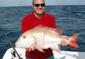 海里的鱼真大