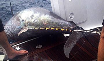 女子钓到800斤大鱼