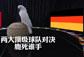 神鸟凤凤预测德国打败葡萄牙