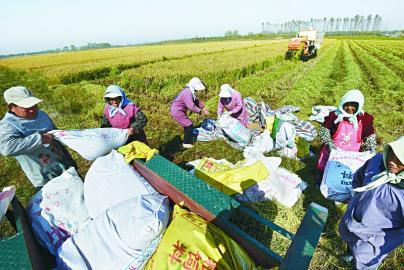 农民专业合作社十月忙收获