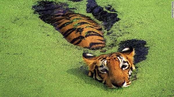 全球濒临灭绝的野生动物
