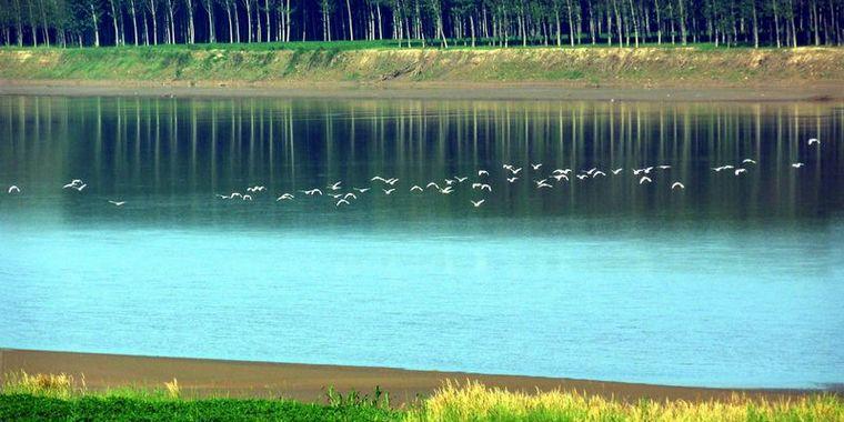 玫瑰湖湿地 水鸟翩翩起舞