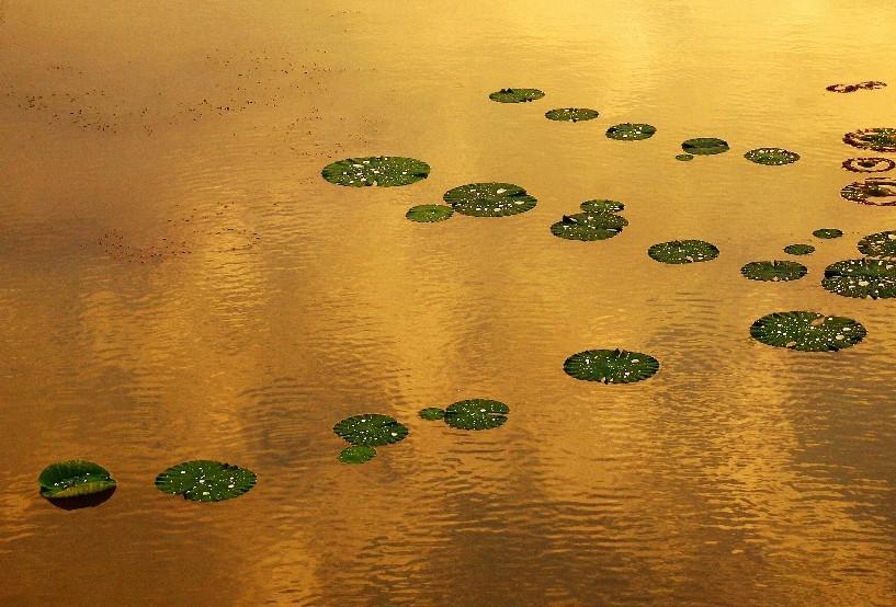 【徐州】潘安湖湿地公园