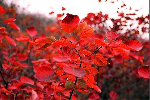 晋新高速—s229—万仙山景区 推荐理由:看红叶是必须的