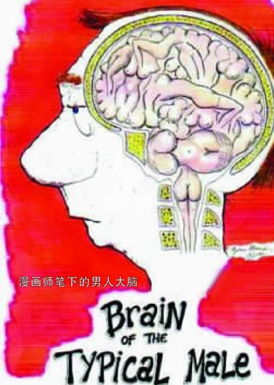 大脑也有男女之分 广州频道