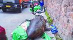 六米长鲨鱼被吊进居民院 买主遭调查