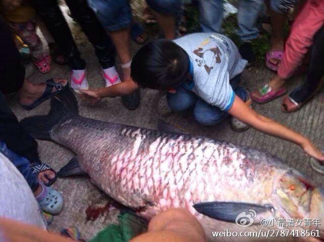 浙江一水库泄洪后市民捕到很多巨鱼 - wamoga - wamoga