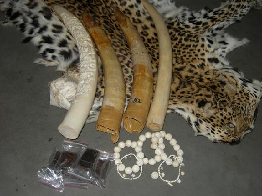 收售珍贵濒危野生动物制品