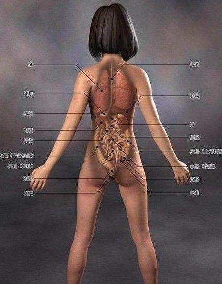 日本3d美女医学人体解剖图