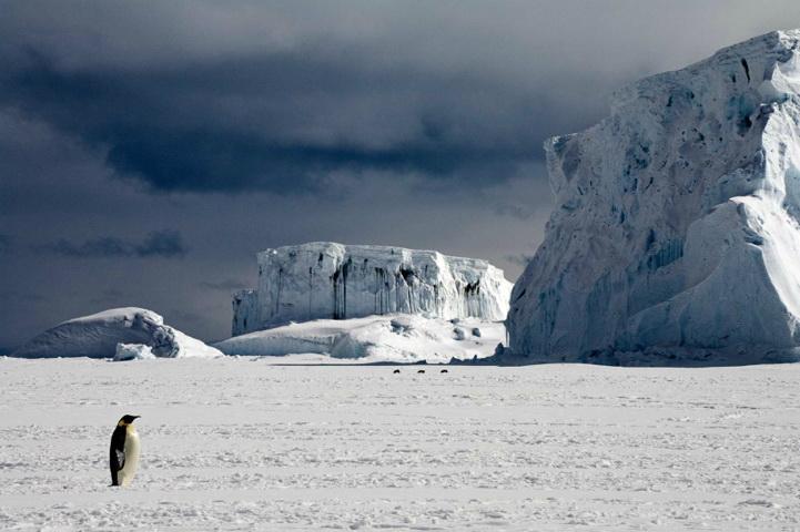 南极大陆的动物却过着十分艰难的生活.如同记录影片《帝企鹅高清图片