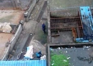 江西宜春一公园老虎疑因发情咬死饲养员