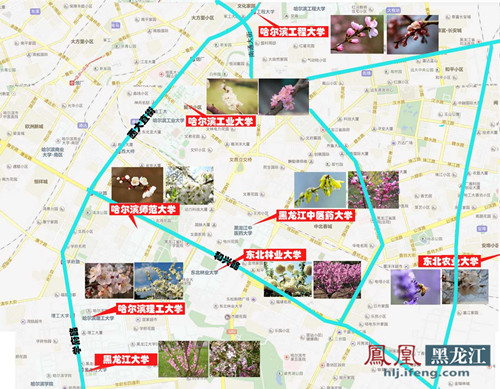 哈尔滨高校赏花地图 坐等花开
