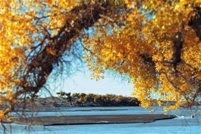 内蒙古自治区阿拉善盟额济纳胡杨林.-额济纳的金色秋天
