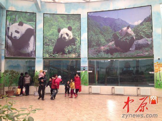 """郑州动物园一大熊猫疑似""""失踪"""" 园方回应(图)"""