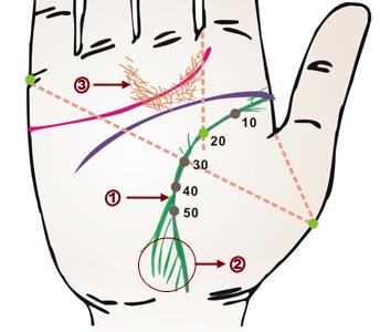 从掌纹看健康_揭秘:从掌纹看你的身体是否健康(图)