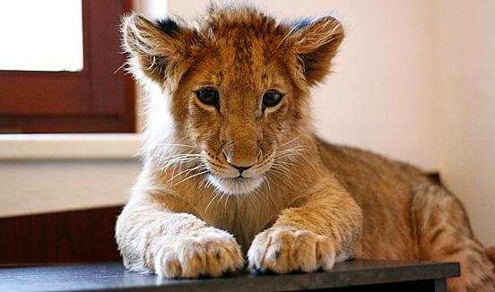 最可爱动物宝宝 涉世未深眼神懵懂体娇小(图)