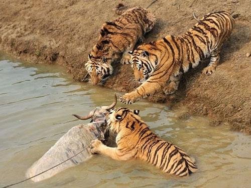 西安秦岭野生动物园亲近野生动物的理想之地_陕西频道