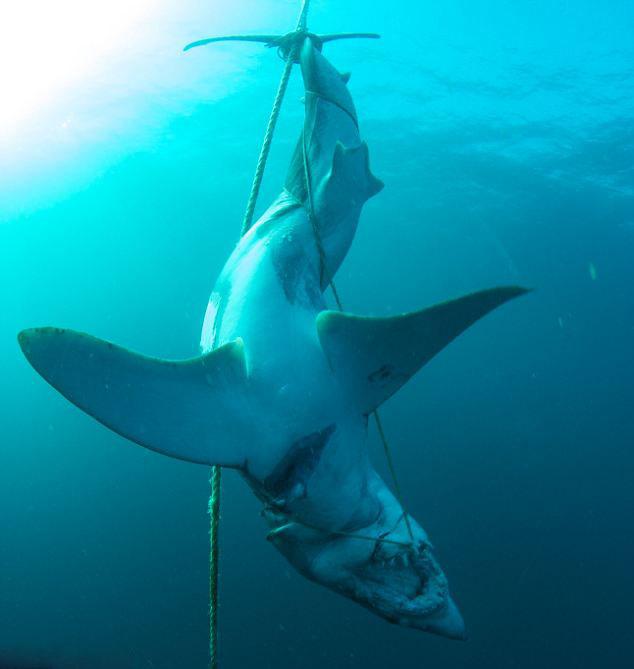 壁纸 动物 海洋动物 鲸鱼 桌面 634_669