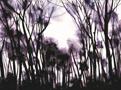 《水彩作品2010-4》