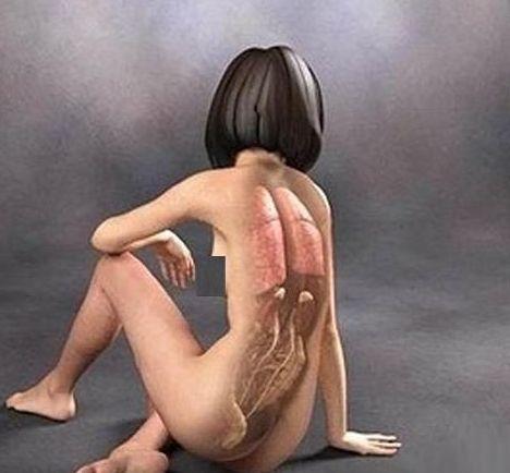 【转载】人体在不同动作下,身体内部什么样?  (3D解剖图) - 安然 - 轩鼎紫气