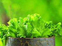 有机蔬菜:美味健康二者兼得