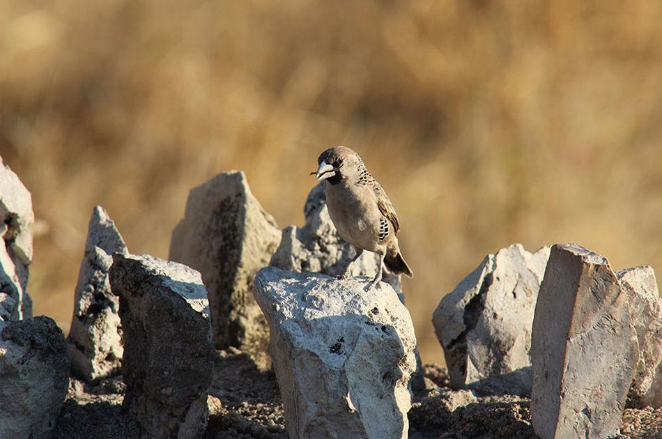 能防止鸟儿被飞翔在鸟巢上空的老鹰捕食