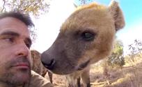 管理员与狮子拥抱和鬣狗亲吻如一家人