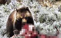 实拍印度两男子遭熊撕咬面目全非