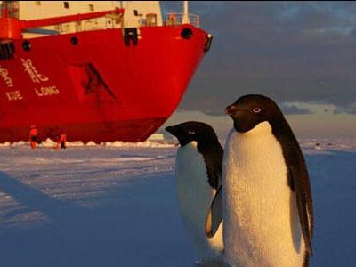 企鹅也八卦 集体围观科考队南极卸载工程