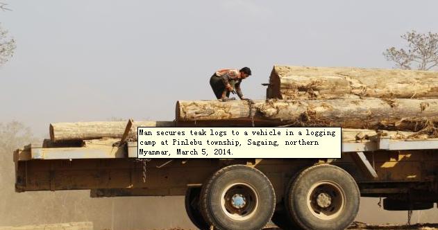 外媒:缅军突然逮捕百余中国人 指控其非法伐木