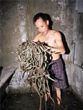 浙江世界第一蛇村:百户人家与蛇共舞