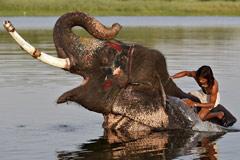 印度50℃高温下的人和动物