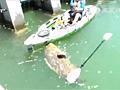 美国渔民钓起超级大鱼 个头几乎和船一样