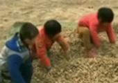 三岁男童被人贩子抢走 大喊让6岁哥哥快跑