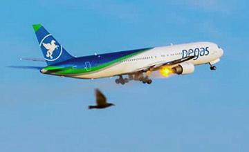 客机起飞时遭鸟击 发动机起火爆炸画面