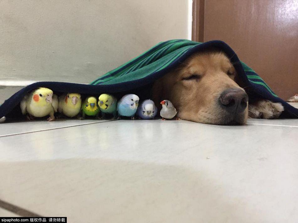 看来狗不仅是人类最好的朋友,也能和其他小动物和平共处.