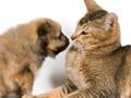 南昌宠物店主长期不喂养 猫狗互相残杀啃食