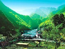 广西深山有一宝藏取之不尽:开采两三年后自己长出