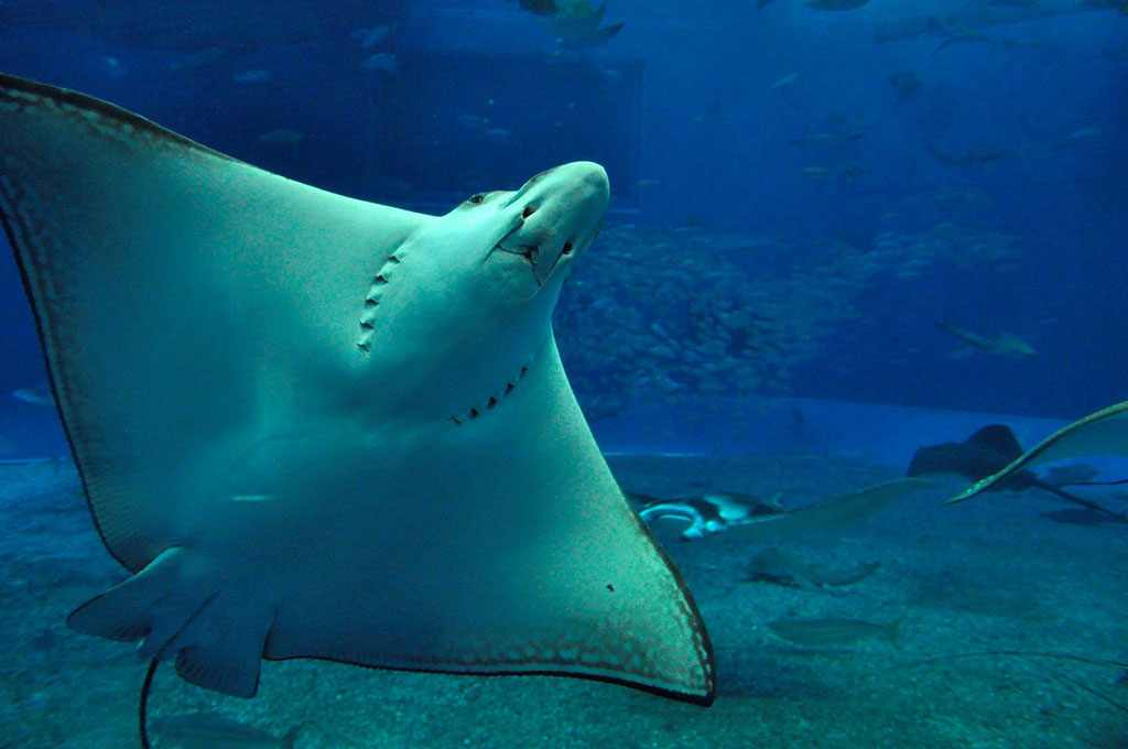 手工制作橡皮泥海洋动物