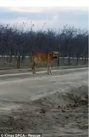 被主人遗弃的狗狗图片 狗狗能看懂主人哭吗